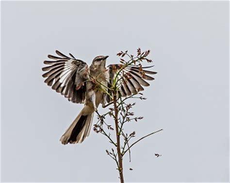 To kill a mockingbird essay conclusion